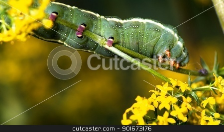 Larva of Butterfly stock photo, Larva of Butterfly a spring day at Laghetti, Italy by baggiovara