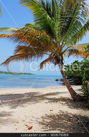A caribbean beach with white sands and a palm tree stock photo, A caribbean beach with white sands and a palm tree by Mike Price