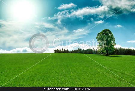Spring landscape with tree and blue sky stock photo, Sun and field of green fresh grass with tree under blue sky by Artush