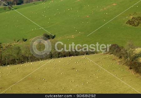 Lots of sheep in fields on the side of a hill in Wales UK. stock photo, Lots of sheep in fields on the side of a hill in Wales UK. by Stephen Rees