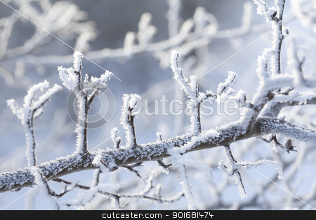 snow crystals stock photo, branches covered in snow and ice crystals by Liv Friis-Larsen