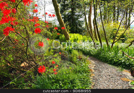 Beautiful Spring garden with red azalea and cobblestones path  stock photo, Beautiful Spring garden with red azalea and cobblestones path  by Juliet Photography