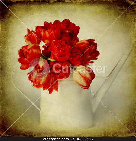 spring tulips stock photo, Fresh red tulips in white watering can by klenova