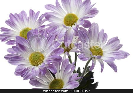close up shot of purple flowers stock photo, close up shot of purple flowers by Dunning Adam Kyle