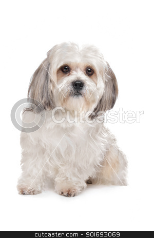 Boomer dog stock photo, Boomer dog in front of a white background by Erik Lam