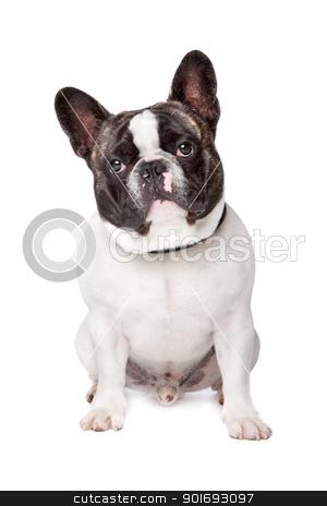 Cute French Bulldog stock photo, Cute French Bulldog sitting on a white background by Erik Lam