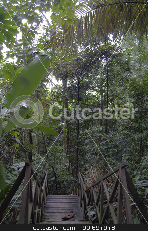 Malaysian jungle stock photo, Malaysian jungle by Vanessa GF