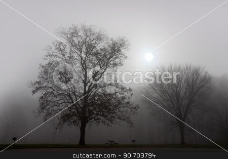 Landscape of fog stock photo, Trees in early morning fog  by Sreedhar Yedlapati
