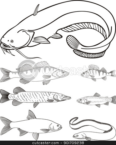 Predatory freshwater fish stock vector clipart, vector drawing catfish, zander, perch, pike, trout, eel, asp  by Čerešňák