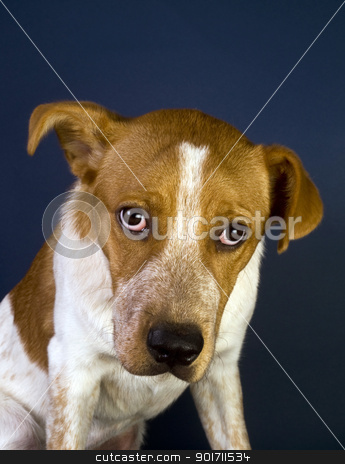 Cute Red Head Puppy  stock photo, Cute puppy with strong magical eyes. He is six months old. by WScott