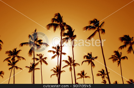 Orange Cast Palm Trees stock photo, The silhouettes of a bunch of palm trees shot against the setting sun.  by Chris Hill