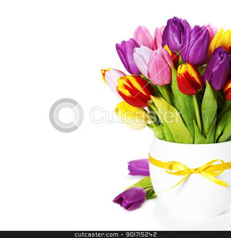 fresh tulips stock photo, fresh spring tulips on white background by klenova