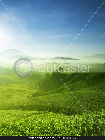 Tea Farm stock photo, Tea Farm landscape in Cameron Highland, Malaysia. by szefei