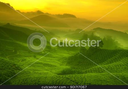 Tea plantation stock photo, Sunrise view of tea plantation landscape at Cameron Highland, Malaysia. by szefei