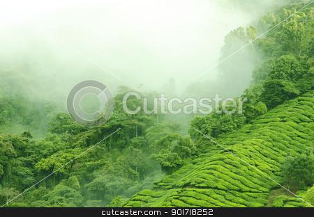 Team farm stock photo, Morning fog over tea farm at Cameron Highland Malaysia by szefei