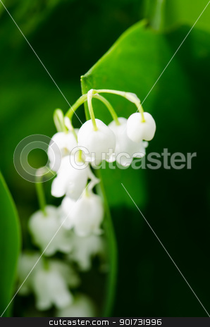 Lily of the Valley spring stock photo, Sweet lily of the Valley spring by Nanisimova
