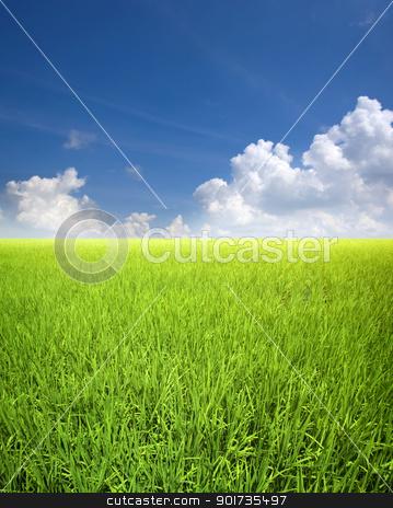 Rice field stock photo, Landscape of rice field in Asia, Malaysia, Sekinchan. by szefei