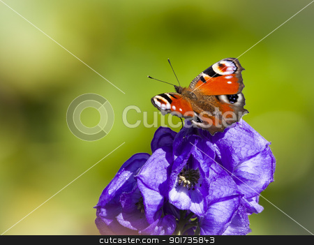 Inachis Io butterfly stock photo, An image of a nice white butterfly Inachis Io by Markus Gann