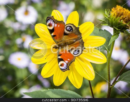 butterfly Inachis Io stock photo, An image of a nice butterfly Inachis Io by Markus Gann