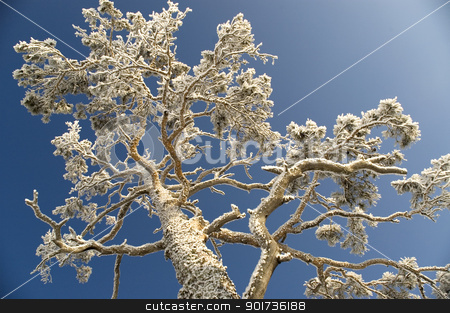 Snowy winter tree. stock photo, On a background of the light-blue sky a tree in snow. by Yury Ponomarev