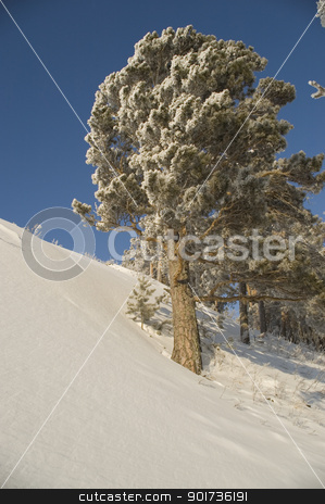 Snowy winter tree. stock photo, Slope of a mountain. A tree in snow on a background of the light-blue sky. by Yury Ponomarev