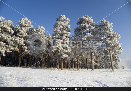 Snow winter trees. stock photo, On a background of the light-blue sky there are a lot of trees in snow. by Yury Ponomarev