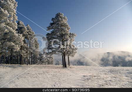 Winter scene stock photo, Winter landscape. A fog. Trees in snow. by Yury Ponomarev
