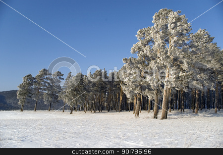 Winter landscape stock photo, Slope of a mountain. A tree in snow on a background of the light-blue sky. by Yury Ponomarev
