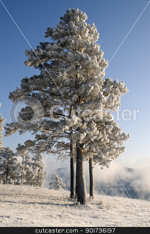Snowy winter tree. stock photo, Winter landscape. A fog. Trees in snow. by Yury Ponomarev
