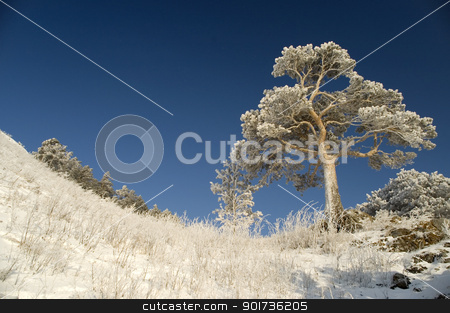 Snowy winter tree. stock photo, On a background of the light-blue sky a lonely tree in snow. by Yury Ponomarev