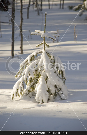 Snow winter trees. stock photo, Lonely tree in snow. Shadows. by Yury Ponomarev