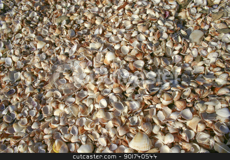 Shells stock photo, It is a lot of fine  on a coast. by Yury Ponomarev