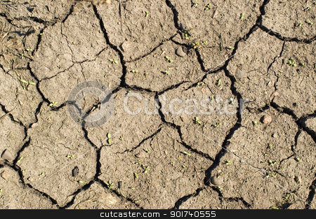 Dry ground. stock photo, Shallow green bush on a background of dry ground. by Yury Ponomarev