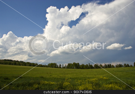 Summer  landscape. stock photo, Green grass and blue sky. by Yury Ponomarev