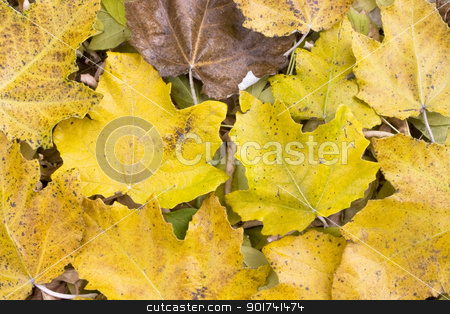 Autumn leafs. stock photo, Colorful leaves collection. by Yury Ponomarev