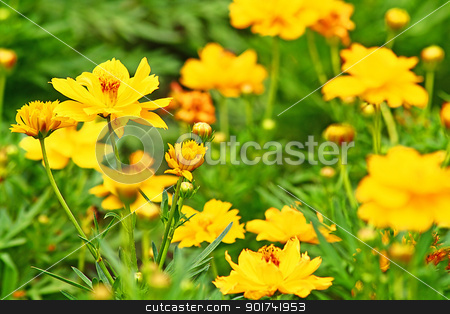 Yellow flowers. stock photo, The flowers are fresh and cheerful. by wilkat
