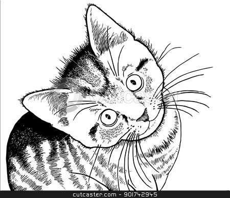 Realistic drawing of a kitten stock vector