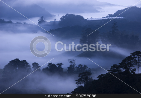 Morning fog at Tea Farm. stock photo, Tea Plantations at Cameron Highlands Malaysia. Sunrise in early morning with fog. by szefei