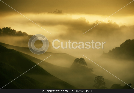 Tea Plantations. stock photo, Tea Plantations at Cameron Highlands Malaysia. Sunrise in early morning with fog. by szefei