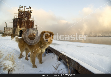 Dog on a coast of the river. stock photo, Dog on a coast of the river on a background of the old ship. by Yury Ponomarev
