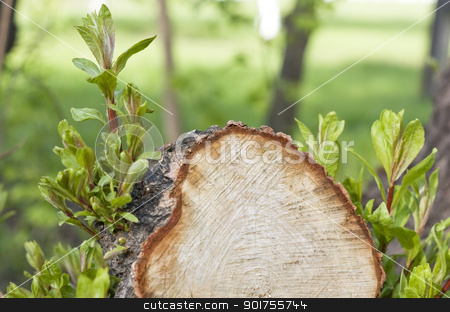 Green sheets. stock photo, Stump of the cut tree. Green sheets. by Yury Ponomarev