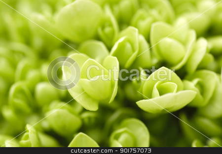 Green plant.  stock photo, Selective focus with shallow depth of field by szefei