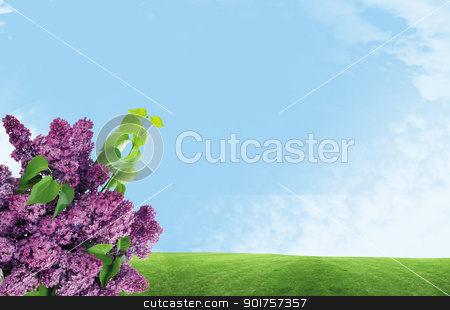 Lilacs stock photo, Fresh spring flowers for your own design by Diana