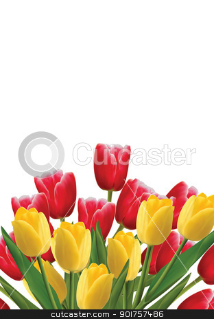 Tulips stock photo, Red and yellow tulips isplated on white background by Diana
