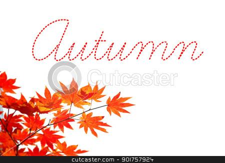 Autumn stock photo, Autumn yellow leaves by Diana