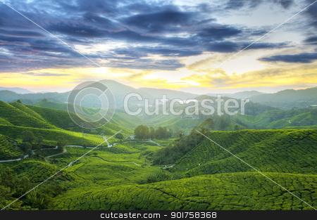 Tea Plantations. stock photo, Tea Plantations at Cameron Highlands Malaysia. Sunrise in early morning with fog. by szefei
