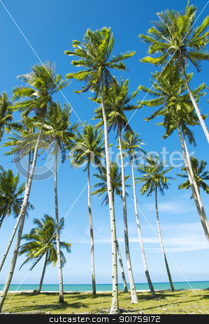 Summer holidays. stock photo,  Palm trees against blue sky at seaside by szefei