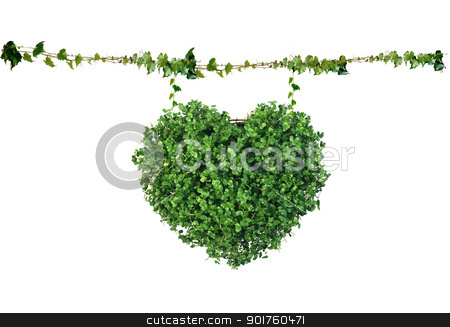 Green heart stock photo, Green heart on white background by Diana