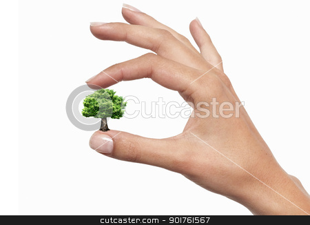 Hands and tree stock photo, Green tree in the fingers on the white background by Diana