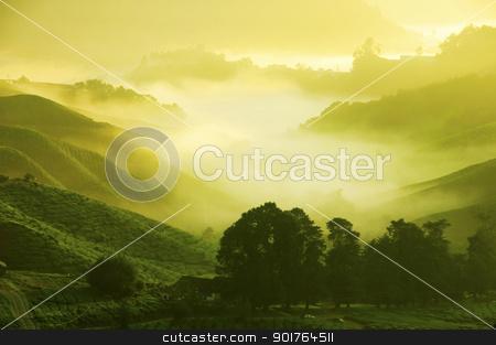 Tea Plantations stock photo, Tea Plantations at Cameron Highlands Malaysia. Sunrise in early morning with fog. by szefei